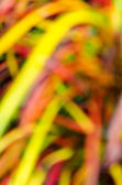 Blur colorful leaf — Stockfoto