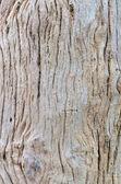 Wood closeup — Stock Photo