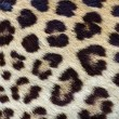 Stock Photo: Leopard hair closeup