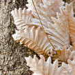 Stock Photo: Dry leaf on tree