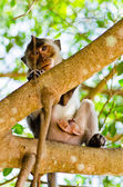 Closeup image of little monkey on the tree — Stock Photo