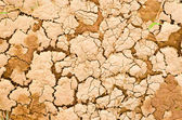 Closeup dry ground surface — Stock Photo