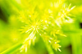 Closeup image of little yellow grass flower — Stockfoto