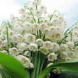 Bouquet of lily of the valley flowers — 图库照片