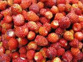 Wild strawberry berries fruit dessert background — Stock Photo