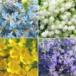 Field flowers abstract summer background — Stock Photo