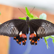 Black and orange butterfly on a leaf — Stockfoto