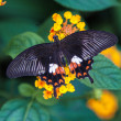 Black orange and white butterfly resing on a leaf — Стоковая фотография
