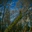 Stock Photo: Trees near Tetney Blow Wells