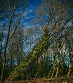 Tetney ブロー井戸の近くの木 — ストック写真