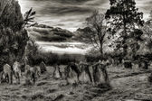 Graveyard black and white — Stock Photo