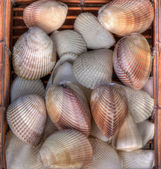 Many shells — Stock Photo
