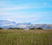Parc Natural de s'Albufera de Mallorca — Stock Photo