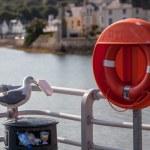Seagull eating — Stock Photo #30944217