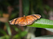 Orage and black butterfly on leaf — Stock Photo