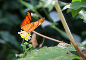 Orange and black butterfly — Stock Photo