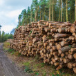 Stock Photo: Logging in Derbshire Dales