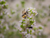 Bee verzamelen — Stockfoto