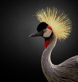 East African Crane — Foto de Stock