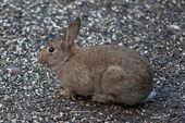 Дикий кролик — Стоковое фото