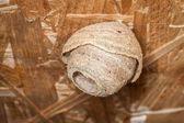 Wasp Nest — Stock Photo
