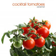 Stock Photo: Fresh tomatoes