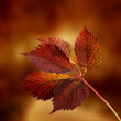 autumn background — Stock Photo #13406989