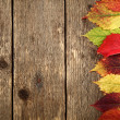 autumn background — Stock Photo #13424911