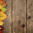 autumn background — Stock Photo #13425333