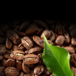 Fresh coffee — Stock Photo #13612271