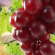 Fresh red grapes on bush — Stock Photo
