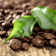 Fresh coffee and leaves with crop of water — Stock Photo