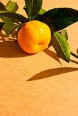Tangerine op een tak op beige achtergrond geïsoleerd — Stockfoto