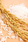 Ears of rice with white rice on beige background #2, vertical or — Stock Photo