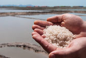 Handful of sea salt in the hands of the background of salt field — Stock Photo