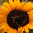 Sunflower with a heart — Stock Photo
