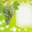 Advertising wine grapes - Stock Vector
