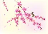 Sakura bird. postcard . menu. — ストックベクタ