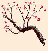 Sakura. carte postale. menu — Vecteur