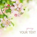 Spring Blossom Border — Stock Photo #10689089