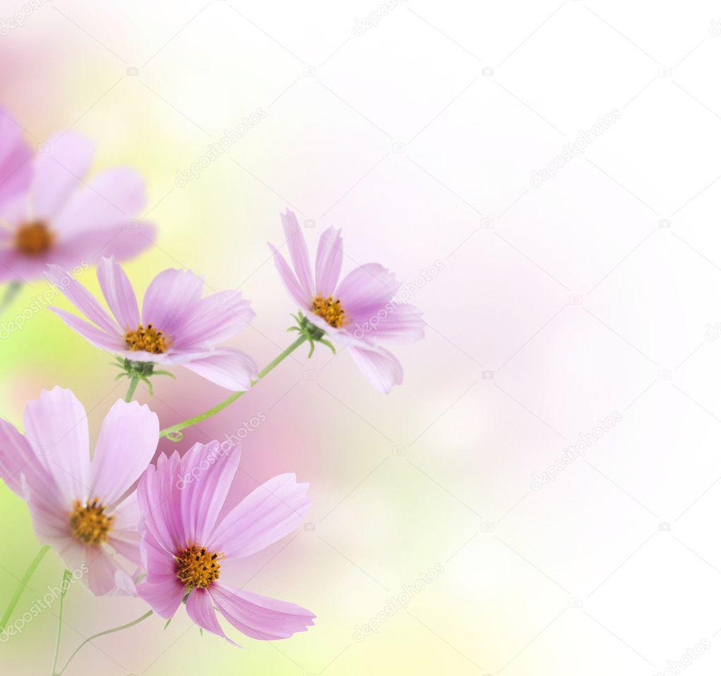 美丽的花朵边框.花艺设计
