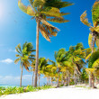 Caribbean Beach. White Sand and Palms — Stock Photo