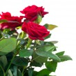 Rose Flowers — Stock Photo #12802859
