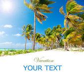 Caribbean Beach. White Sand and Palms — Stock Photo