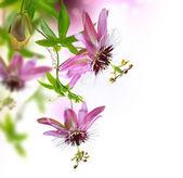 Passiflora Border Design — Stock Photo