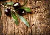 Olive Branch over Wood background — Stock Photo