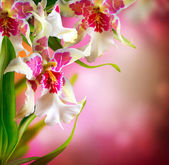 Orchid Flowers Design — Stock Photo