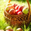 Organic Apples in the Basket. Orchard. Garden — Stock Photo #14134302
