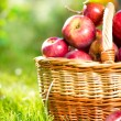 Organic Apples in the Basket. Orchard. Garden — Stock Photo #14134370