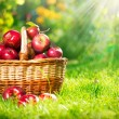 Organic Apples in the Basket. Orchard. Garden — Stock Photo #14134409